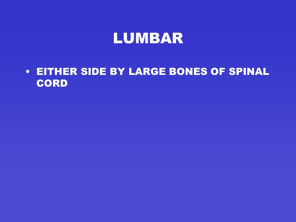 LUMBAR EITHER SIDE BY LARGE BONES OF SPINAL CORD