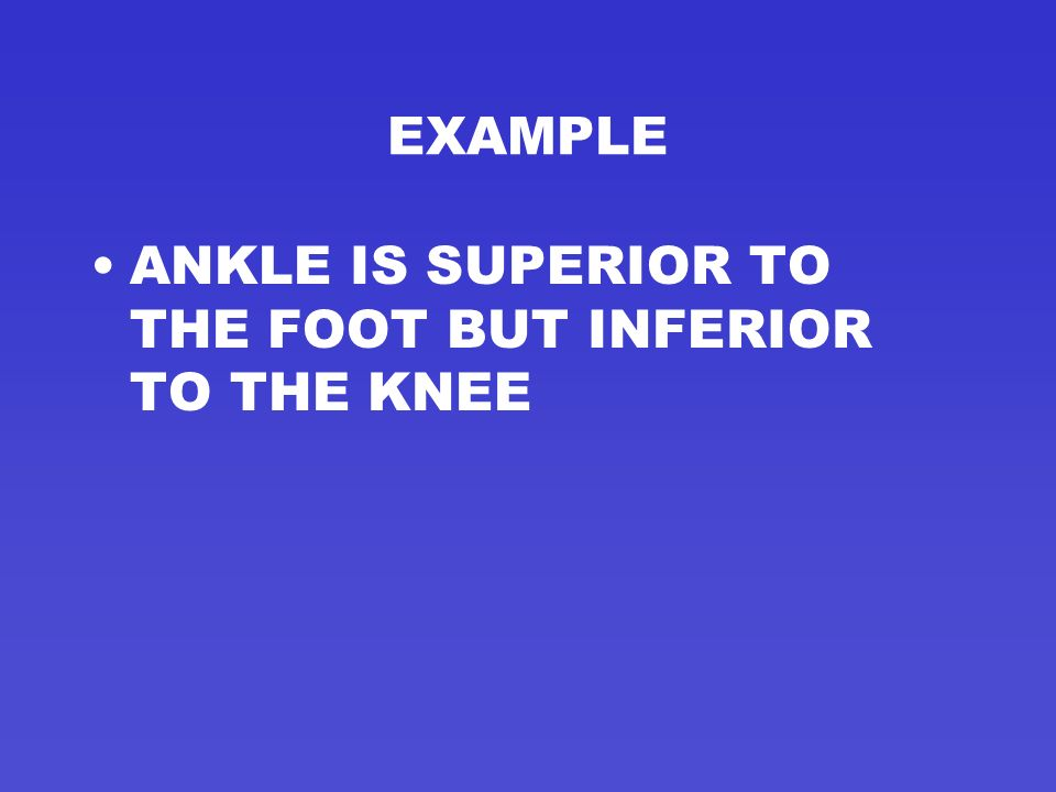 EXAMPLE ANKLE IS SUPERIOR TO THE FOOT BUT INFERIOR TO THE KNEE