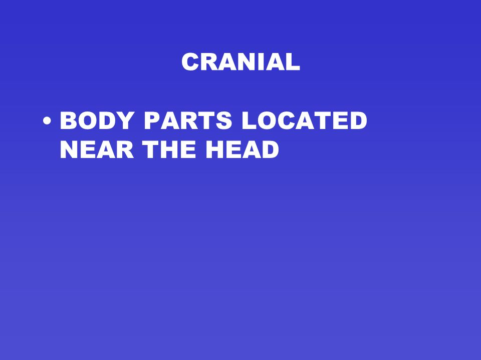 CRANIAL BODY PARTS LOCATED NEAR THE HEAD