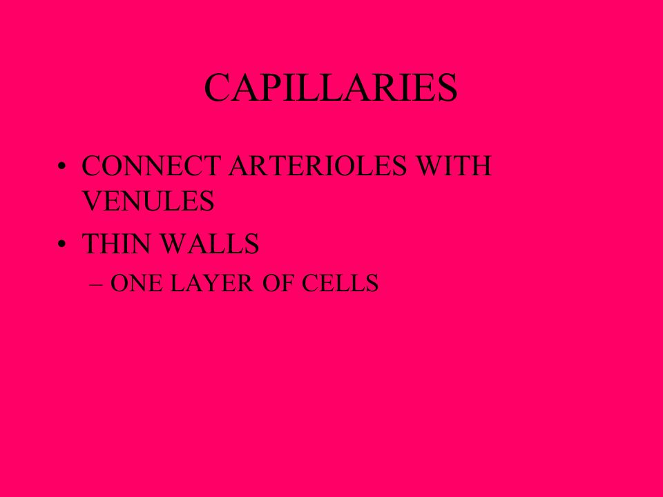 CAPILLARIES CONNECT ARTERIOLES WITH VENULES THIN WALLS