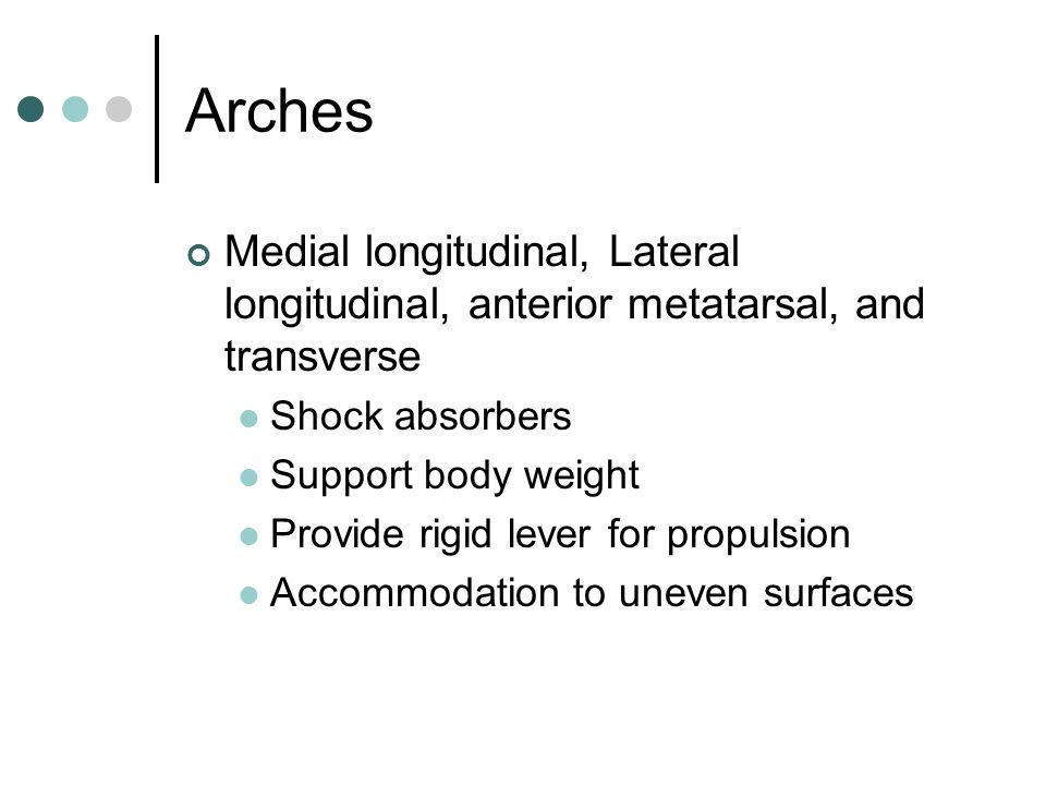 Arches Medial longitudinal, Lateral longitudinal, anterior metatarsal, and transverse. Shock absorbers.