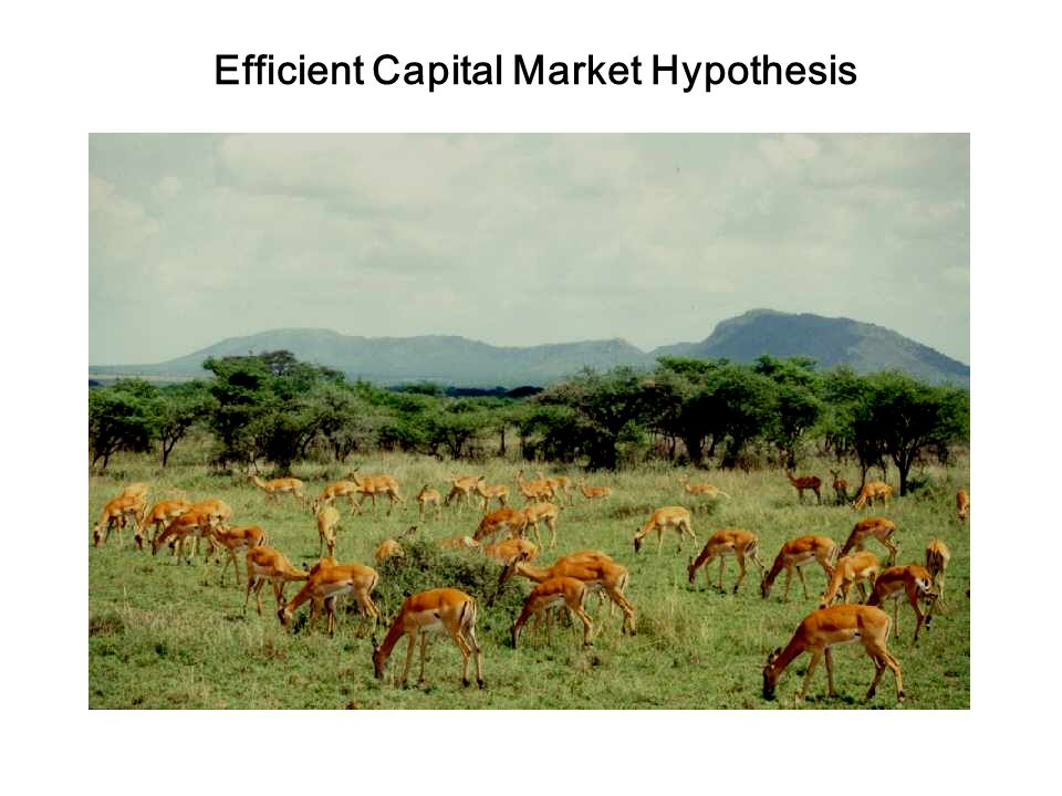 the semi strong form of the efficient market hypothesis essay In this essay, firstly, the efficient market hypothesis (emh) is given an   following the weak-form emh, is the semi-strong form efficiency in.
