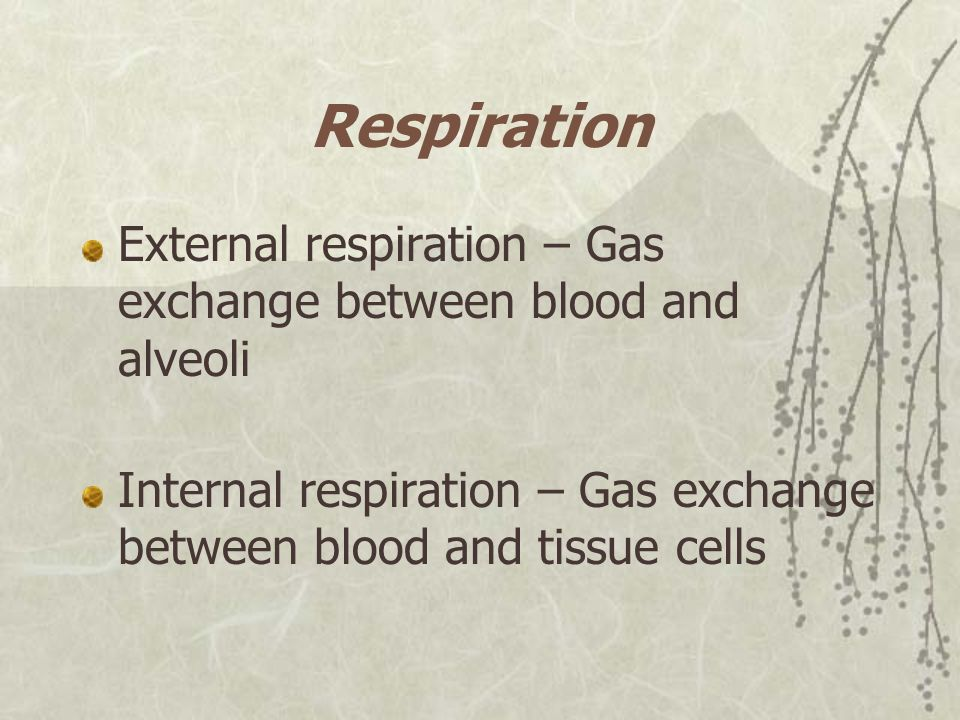Respiration External respiration – Gas exchange between blood and alveoli.