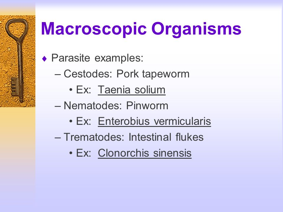 Macroscopic Organisms