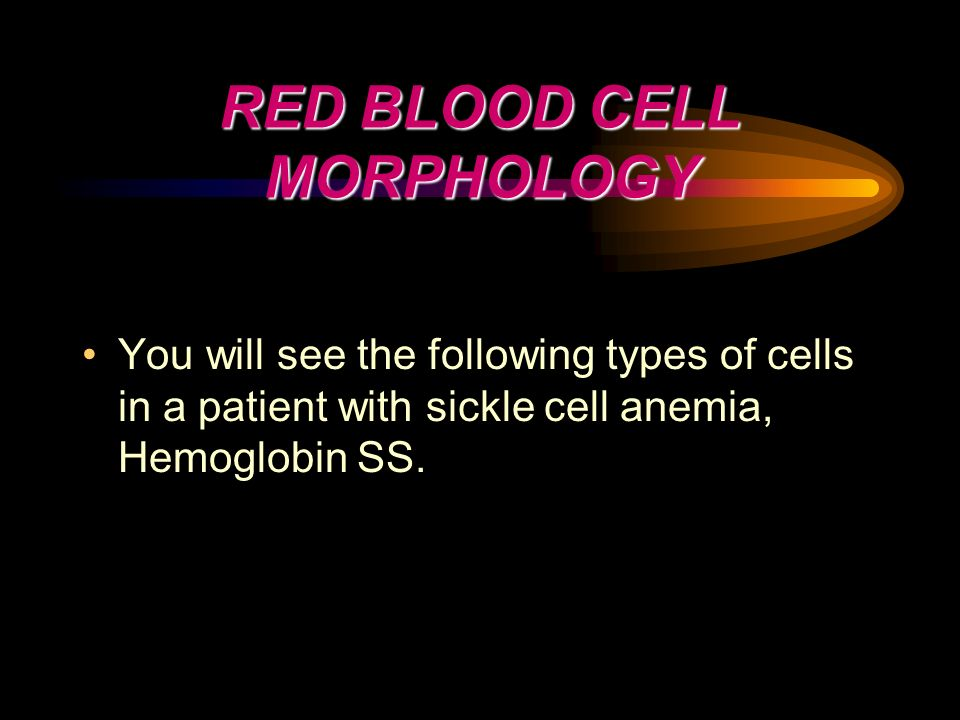 RED BLOOD CELL MORPHOLOGY