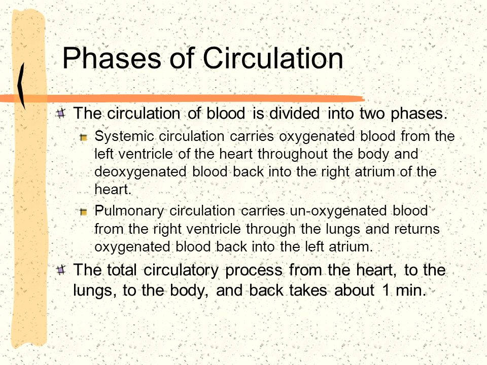 Phases of Circulation The circulation of blood is divided into two phases.