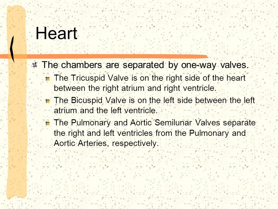 Heart The chambers are separated by one-way valves.