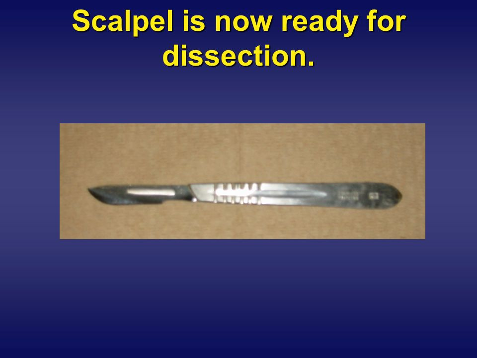 Scalpel is now ready for dissection.