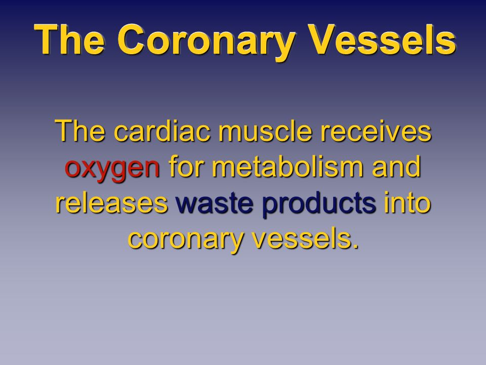 The Coronary Vessels The cardiac muscle receives oxygen for metabolism and releases waste products into coronary vessels.