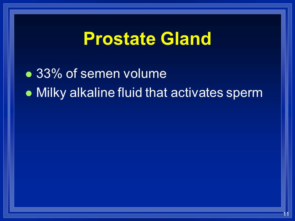 Prostate Gland 33% of semen volume