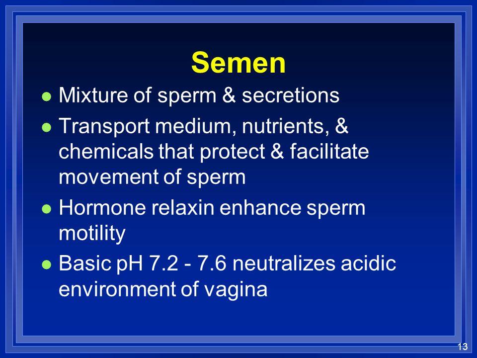 Semen Mixture of sperm & secretions