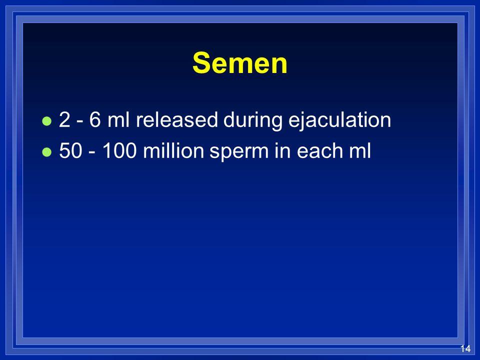 Semen 2 - 6 ml released during ejaculation