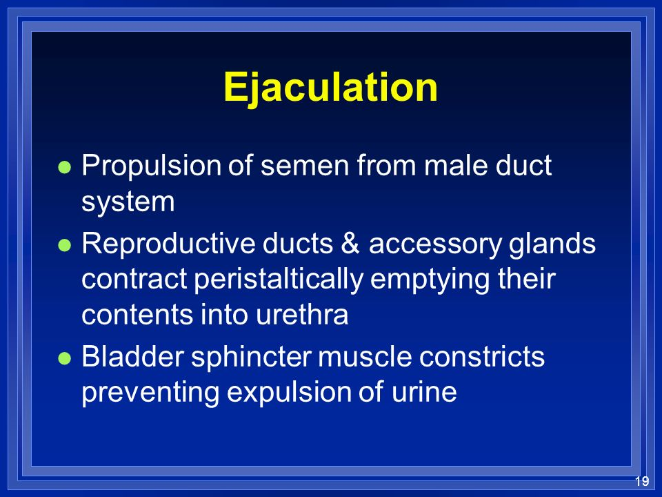 Ejaculation Propulsion of semen from male duct system