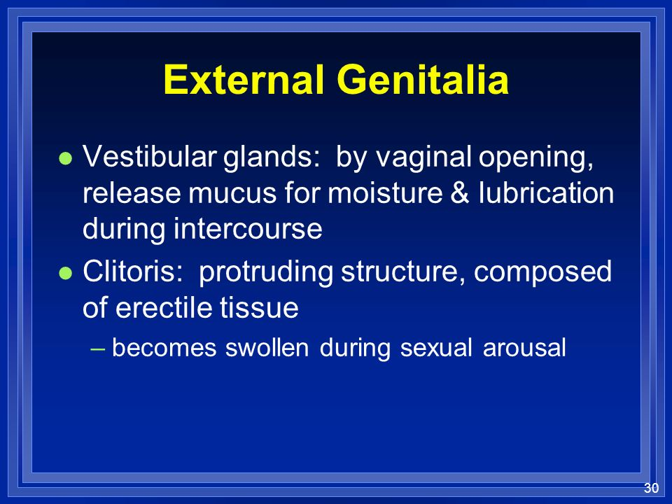 External Genitalia Vestibular glands: by vaginal opening, release mucus for moisture & lubrication during intercourse.