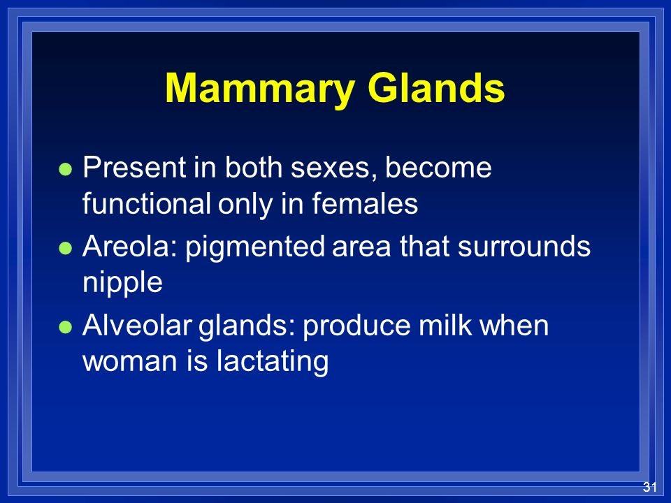 Mammary Glands Present in both sexes, become functional only in females. Areola: pigmented area that surrounds nipple.