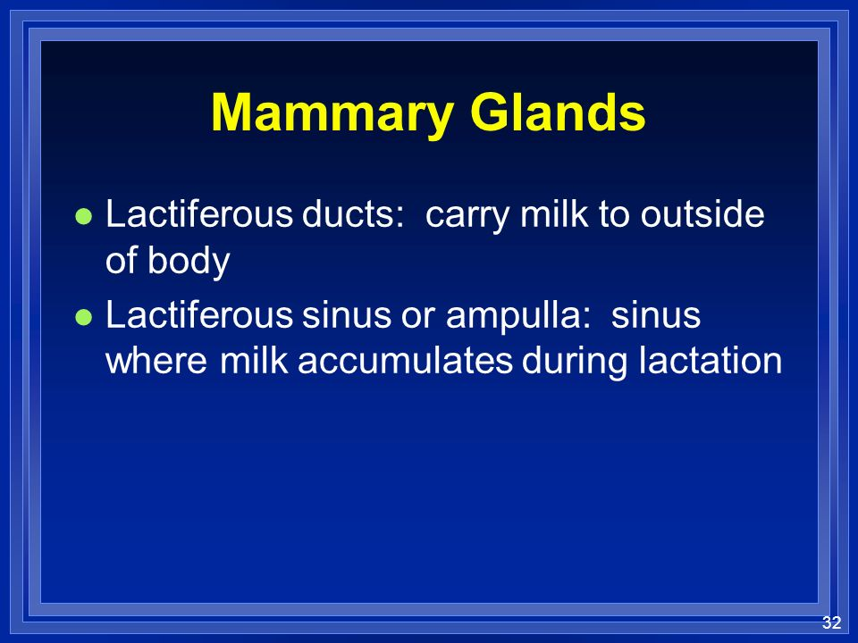 Mammary Glands Lactiferous ducts: carry milk to outside of body