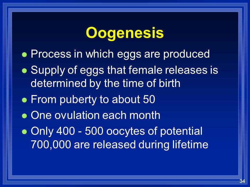 Oogenesis Process in which eggs are produced