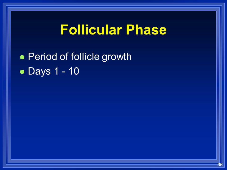 Follicular Phase Period of follicle growth Days 1 - 10