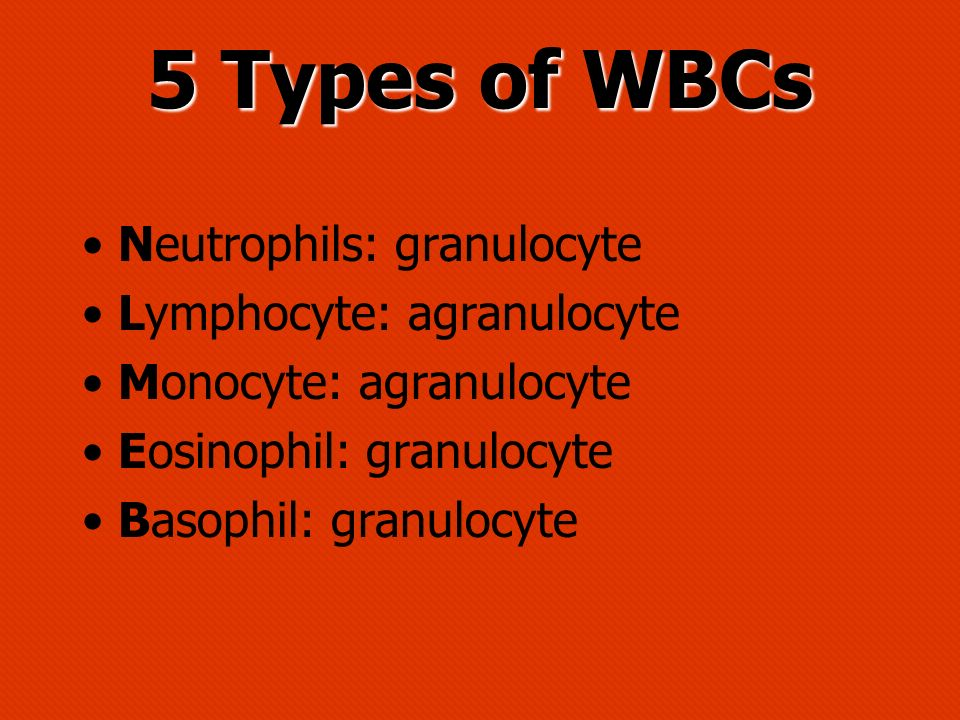 5 Types of WBCs Neutrophils: granulocyte Lymphocyte: agranulocyte