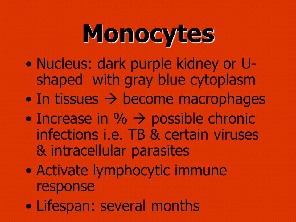 Monocytes Nucleus: dark purple kidney or U-shaped with gray blue cytoplasm. In tissues  become macrophages.