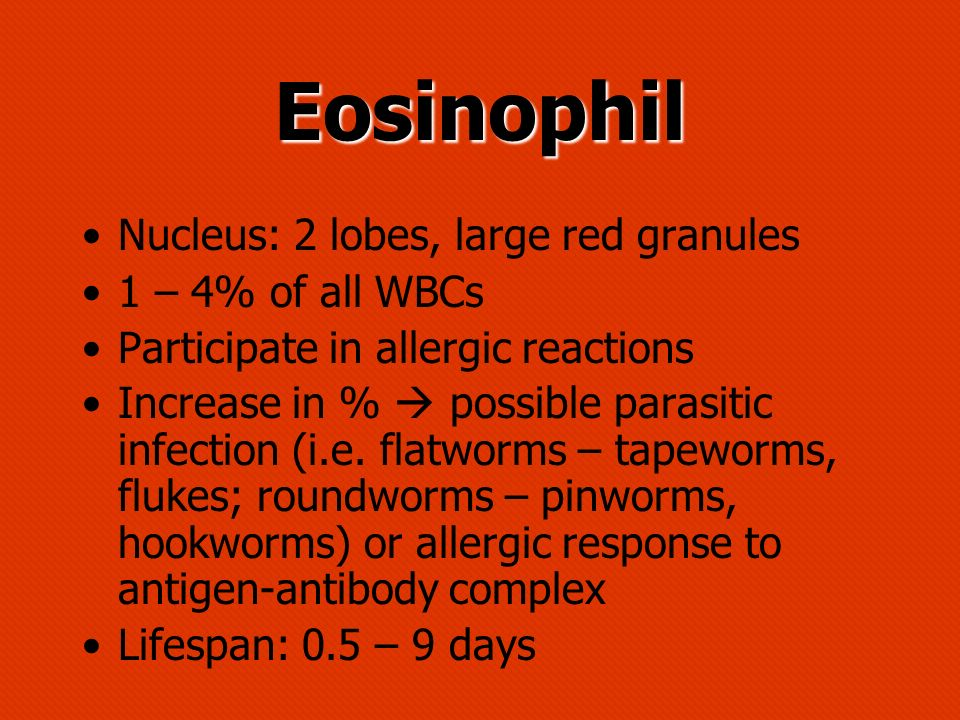 Eosinophil Nucleus: 2 lobes, large red granules 1 – 4% of all WBCs