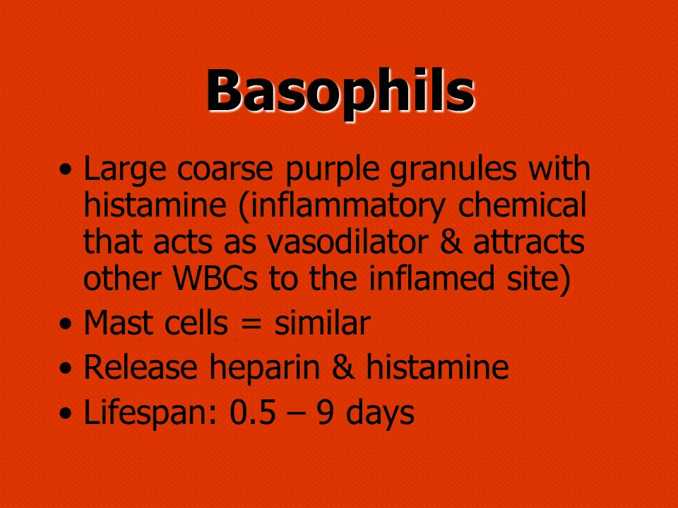 Basophils Large coarse purple granules with histamine (inflammatory chemical that acts as vasodilator & attracts other WBCs to the inflamed site)