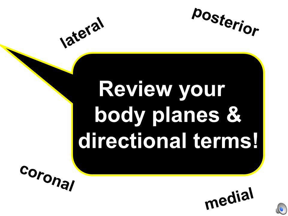 Review your body planes & directional terms!