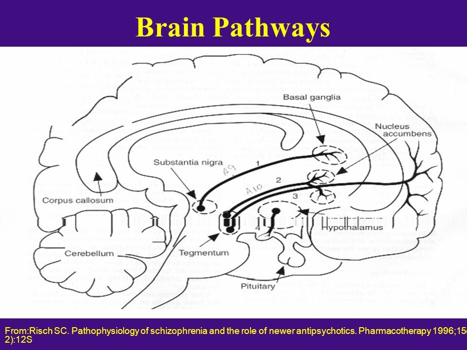 Brain Pathways From:Risch SC.