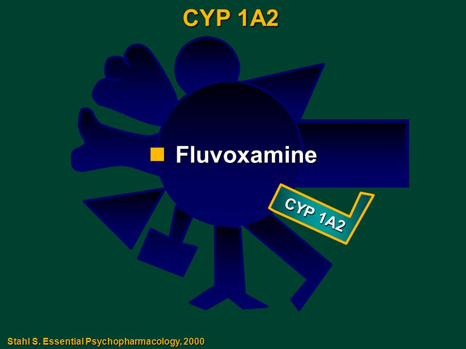 CYP 1A2 CYP 1A2 Fluvoxamine Stahl S. Essential Psychopharmacology, 2000