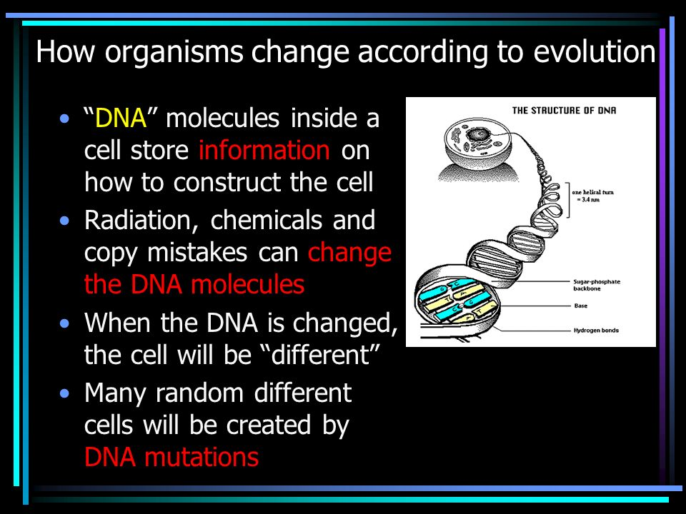 How organisms change according to evolution