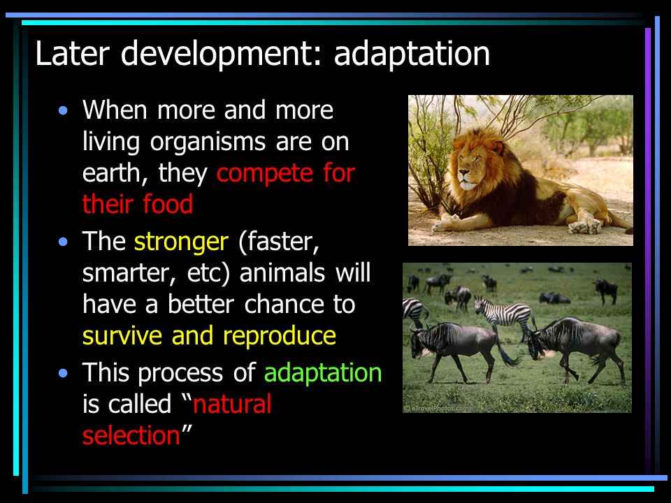 Later development: adaptation