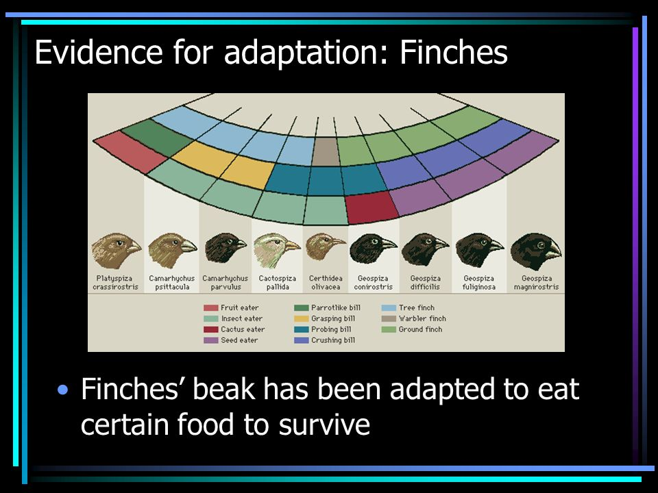Evidence for adaptation: Finches