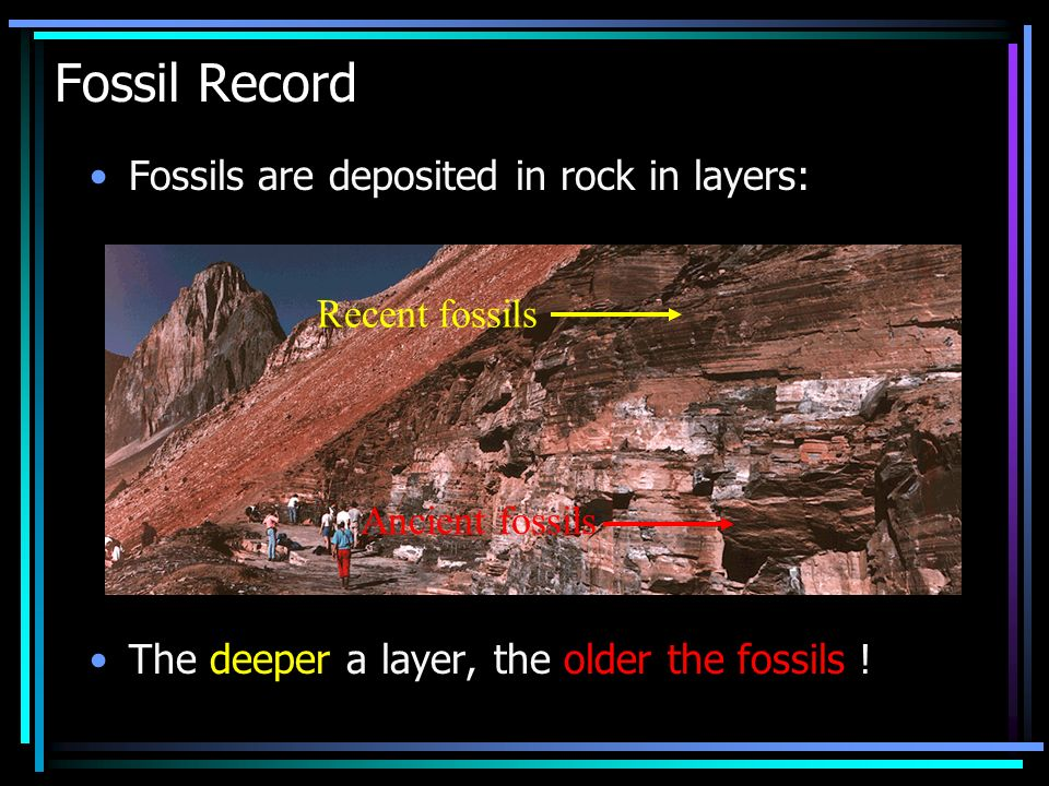 Fossil Record Fossils are deposited in rock in layers: Recent fossils
