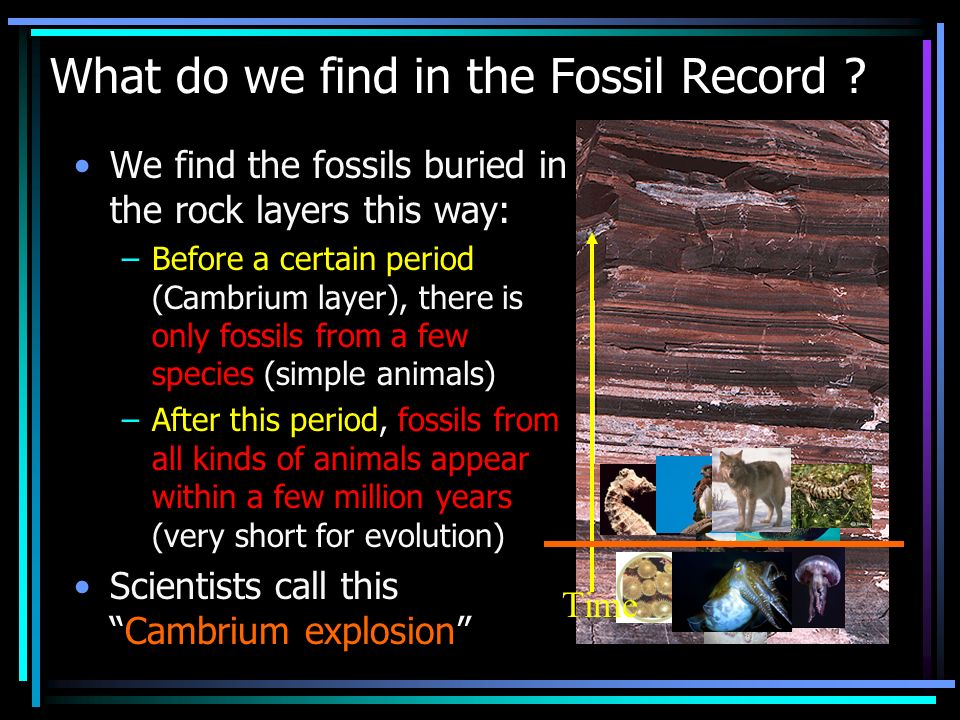 What do we find in the Fossil Record