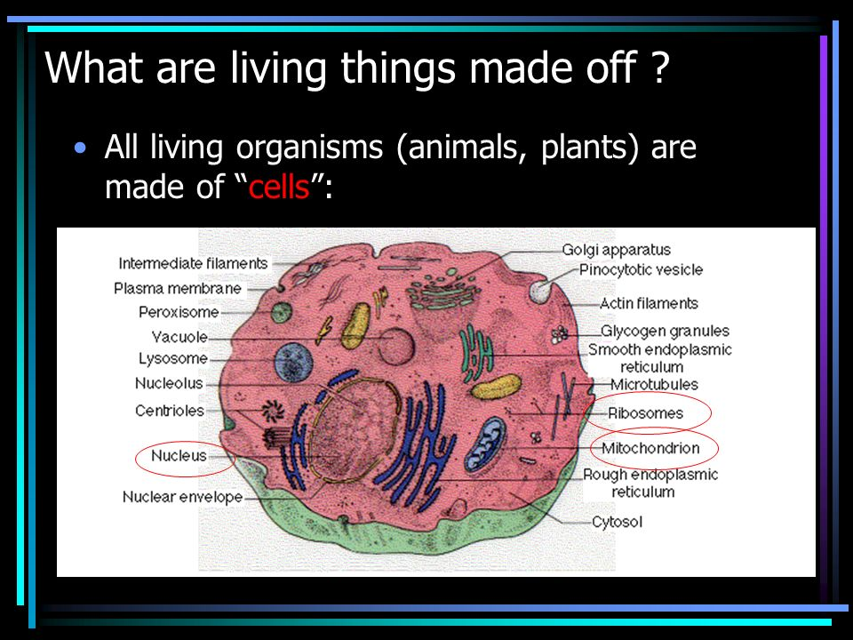 What are living things made off