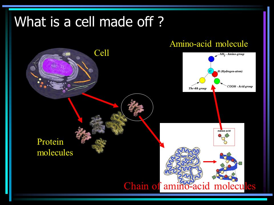 What is a cell made off Chain of amino-acid molecules