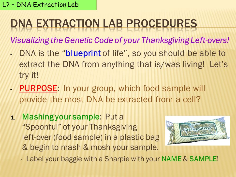 extract dna from anything living As long as you don't mind liquifying your subject in a blender, you can test dna from virtually anything living with this guide from he universe of utah's genetics science learning center learn genetics uses green split peas as a subject, and suggests fruits, meats and vegetables.