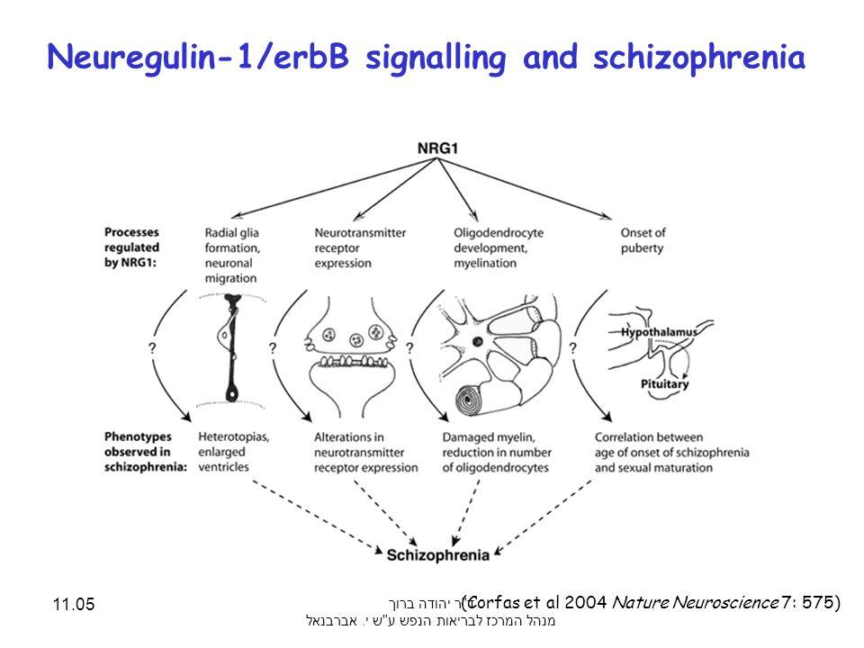 Neuregulin-1/erbB signalling and schizophrenia