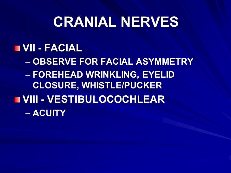 CRANIAL NERVES VII - FACIAL VIII - VESTIBULOCOCHLEAR