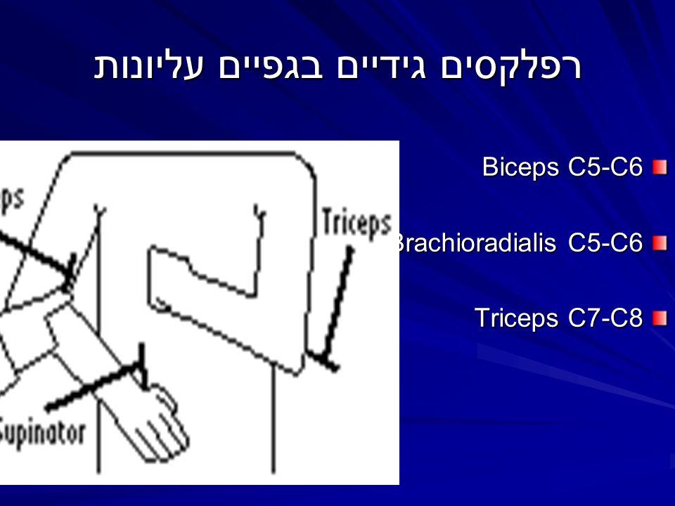 רפלקסים גידיים בגפיים עליונות