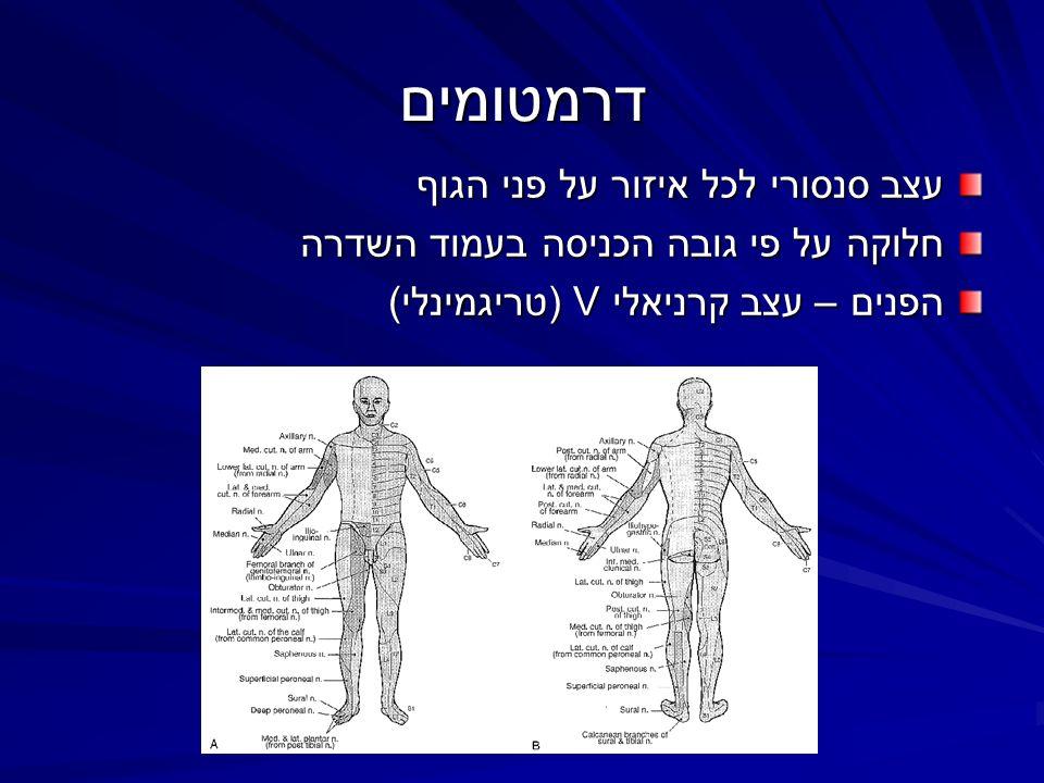 דרמטומים עצב סנסורי לכל איזור על פני הגוף