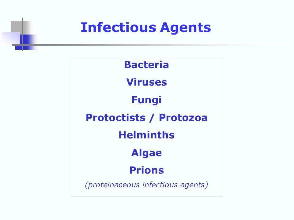 Protoctists / Protozoa
