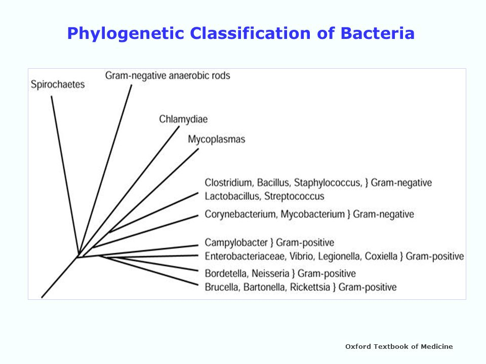 Phylogenetic Classification of Bacteria