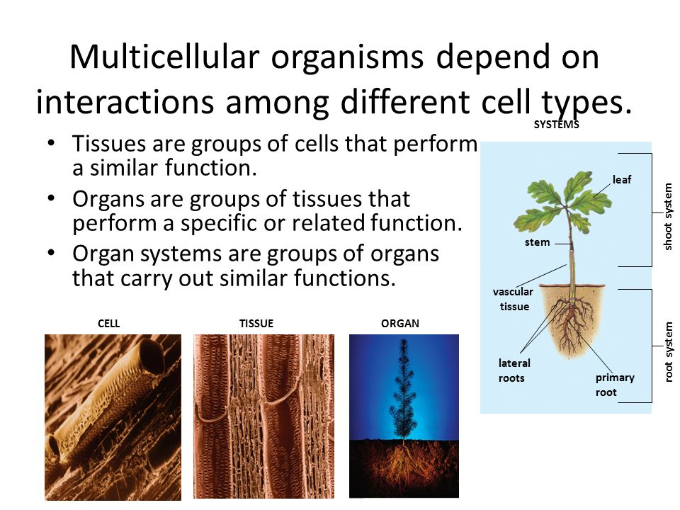 Multicellular organisms depend on interactions among different cell types.