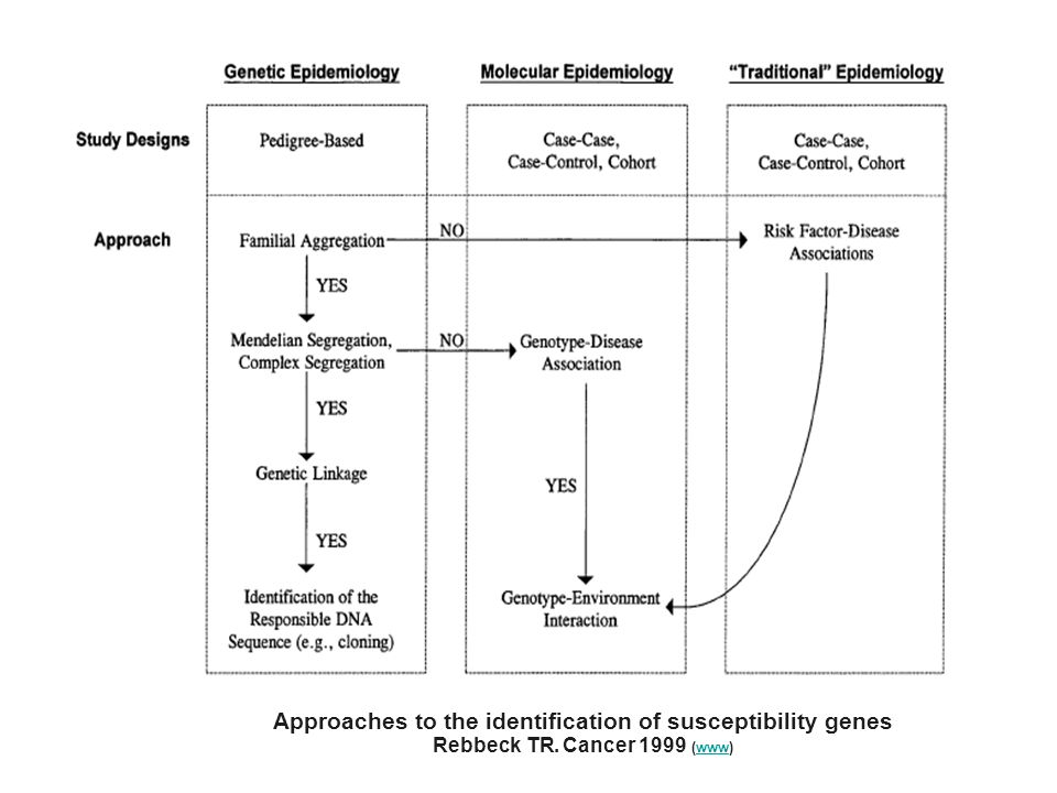 Approaches to the identification of susceptibility genes