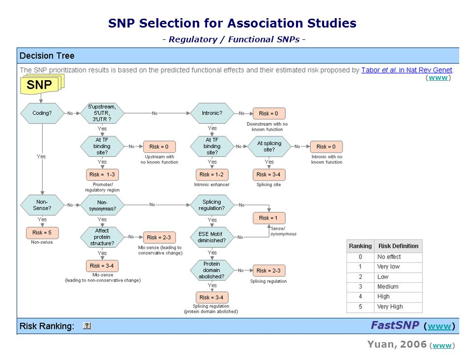 SNP Selection for Association Studies - Regulatory / Functional SNPs -