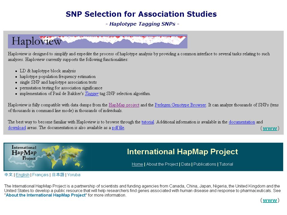 SNP Selection for Association Studies - Haplotype Tagging SNPs -