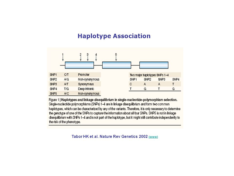 Haplotype Association