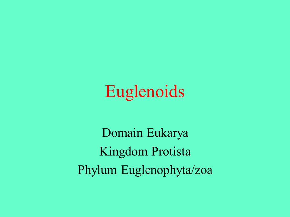 Domain Eukarya Kingdom Protista Phylum Euglenophyta/zoa