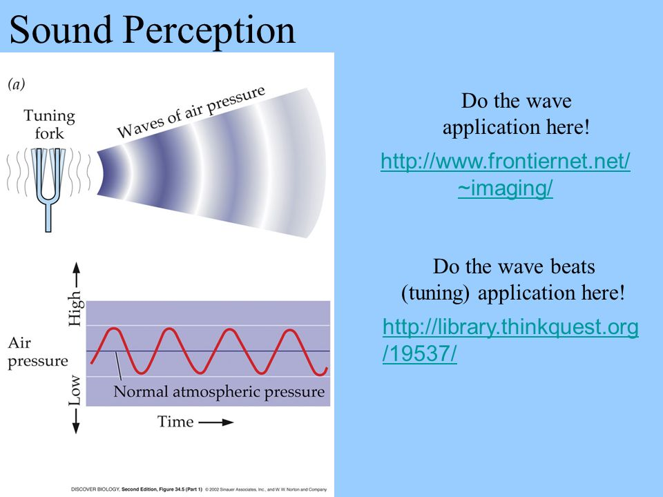 Sound Perception Do the wave application here!